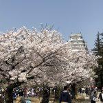 姫路城☆お花見